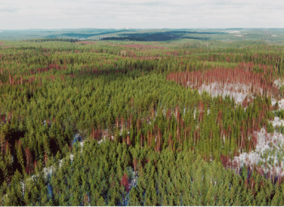 An aerial view of a Finnish forest.