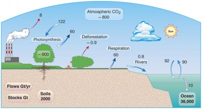 The Global Carbon Cycle.  Graphic by Walter Denn, LBNL, 2010.