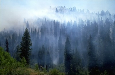 Smoke plumes rise from a forest fire.