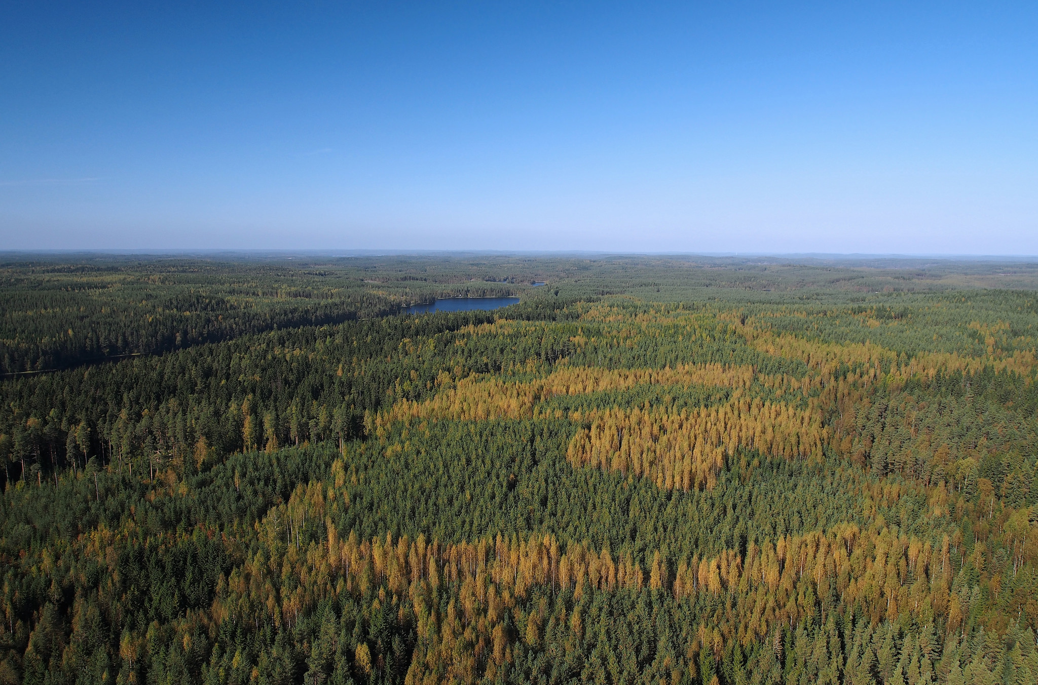 How Heavily Treed Boreal Forests Help Make Clouds